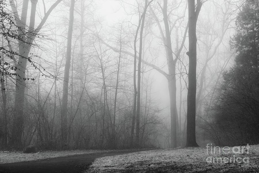 Into the Fog by Karen Adams