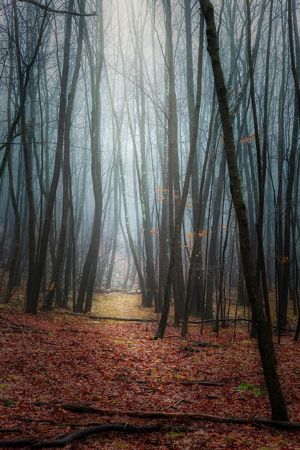 Into the Misty Forest by Bill Wakeley