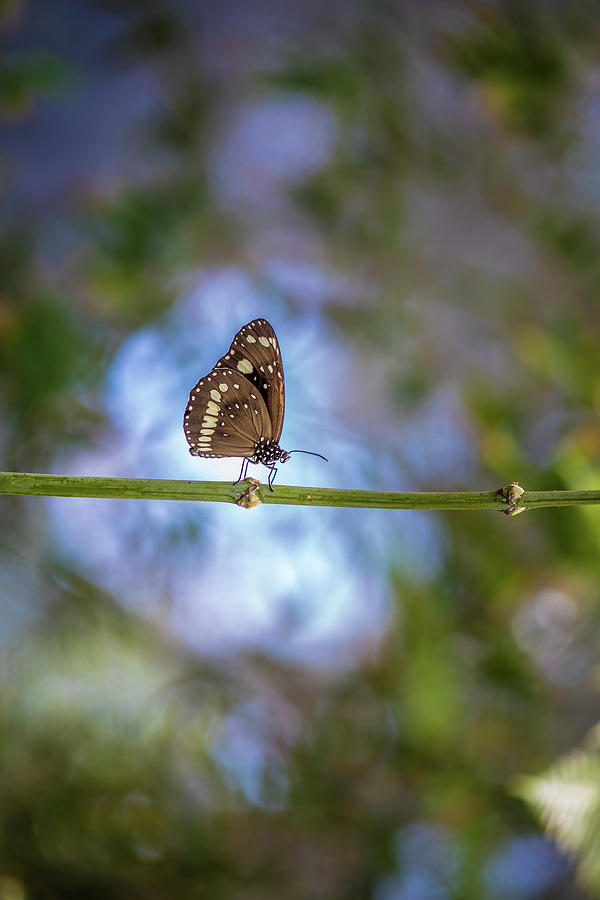 Beautiful Butterfly Photograph - Intrepid Wanderer by Az Jackson
