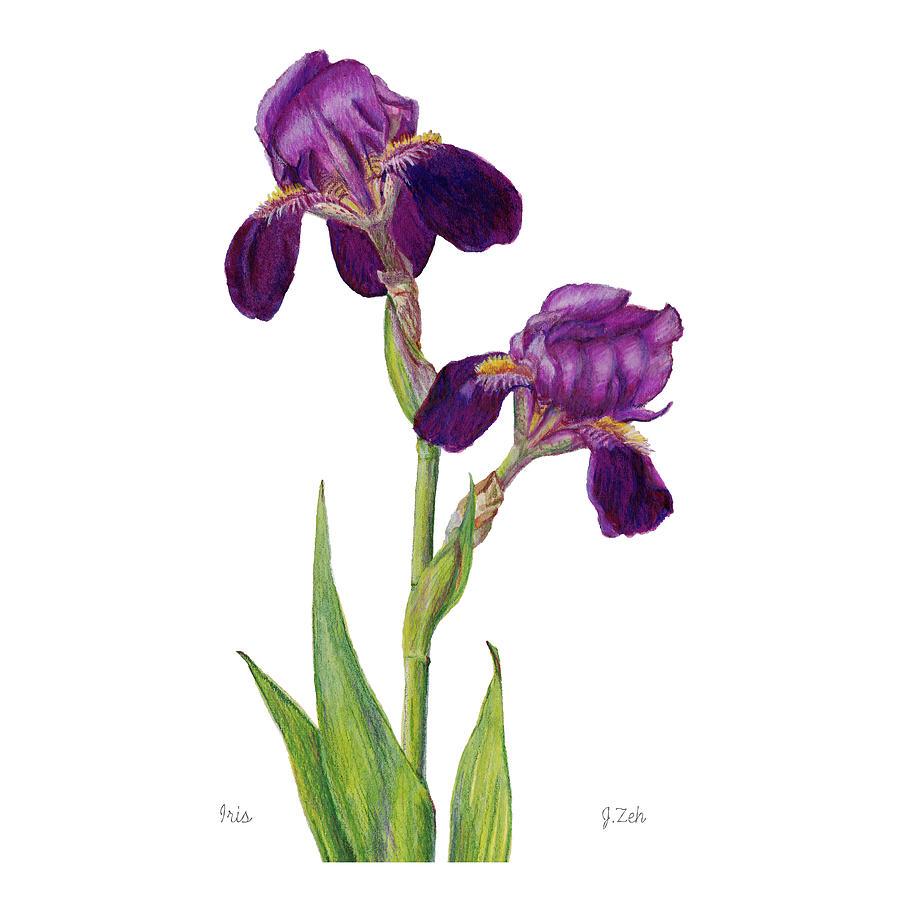Iris by Janet Zeh