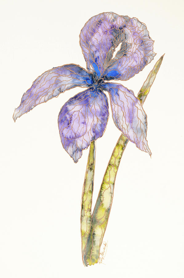 Watercolor Painting - Iris by Kelly Edwards