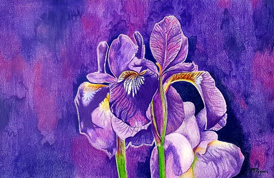 Iris Drawing - Irises by Michelle Ripari