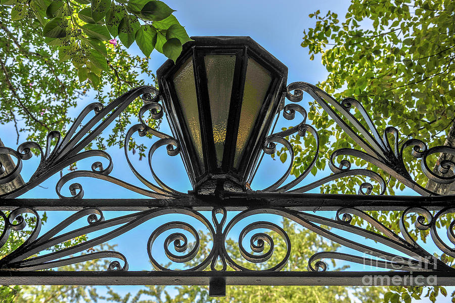Iron Scrolls - Lamp Photograph