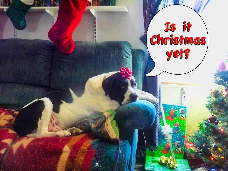 Is it Christmas yet? by Judy Kennedy