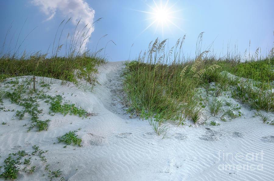 Isle Of Palms Sand Dunes - Sunny Skies Photograph
