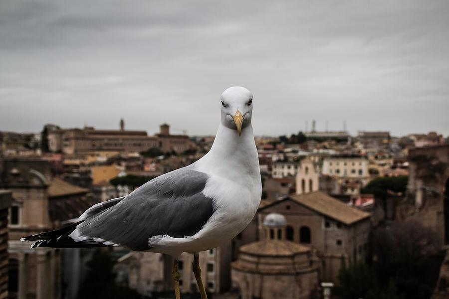 Italian Bird Photograph by Vicky Markolefa