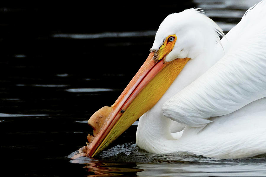 Pelican Photograph - Its Tough Out There by Dot Rambin
