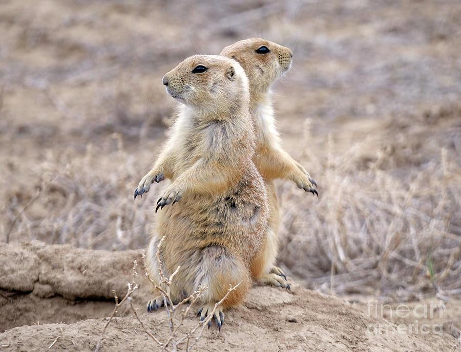 Prairie Dog Photograph - Ive Got Your Back by Jennie MacDonald