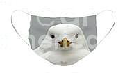 J. Livingston Seagull Face Mask Photograph