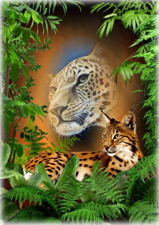 Jaguar Beauty Mixed Media