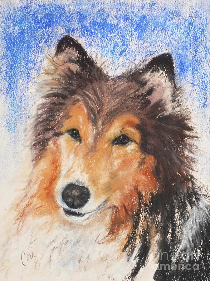 Shetland Sheepdog Drawing - Jake by Cori Solomon