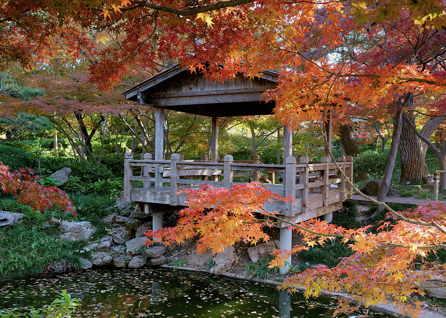 Japanese Garden Fort Worth 111819 by Rospotte Photography