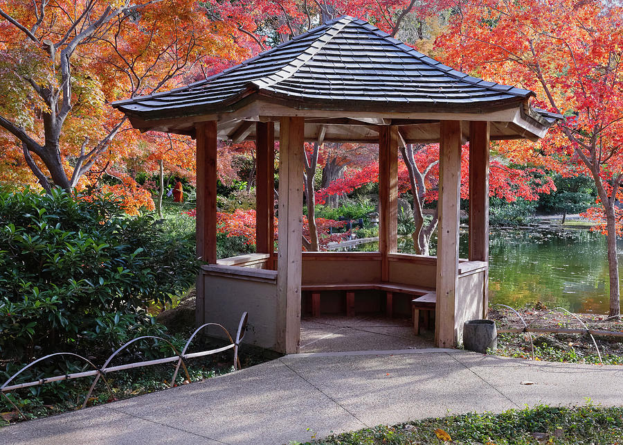 Japanese Garden Fort Worth Ambers V1 1119 by Rospotte Photography