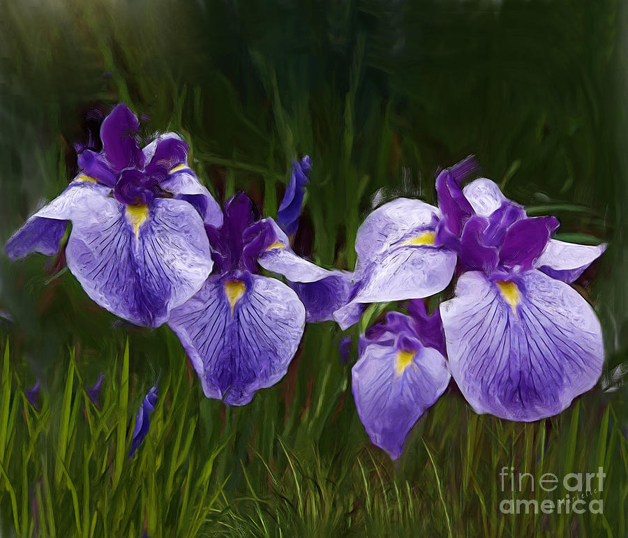 Japanese Iris Awake by J Marielle