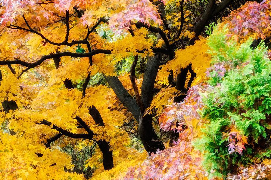 Japanese Zen Garden Photograph