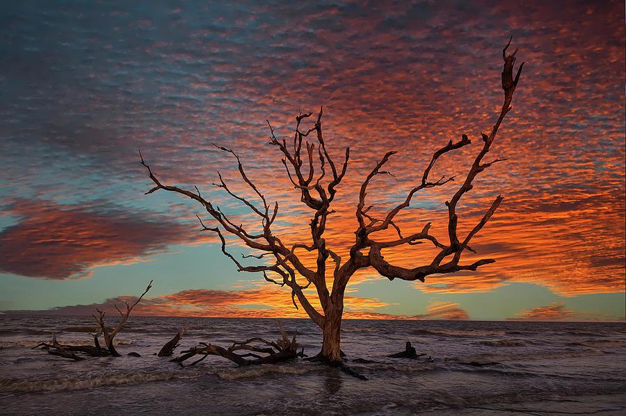 Jekyll Isalnd Oak by Jon Glaser
