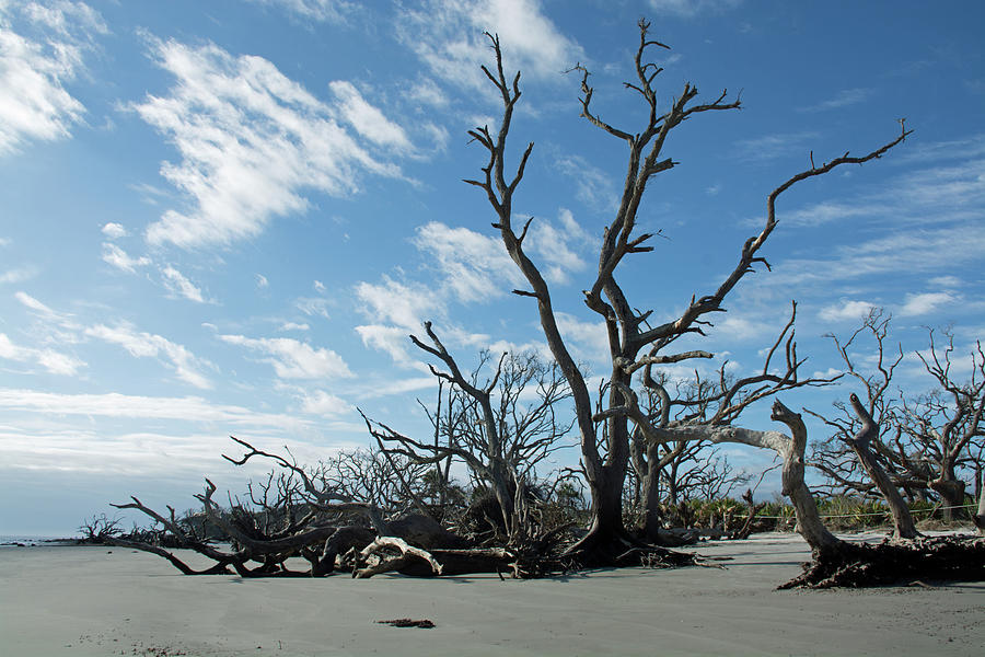 Jekyll Island Driftwood Beach Soaring Clouds by Bruce Gourley