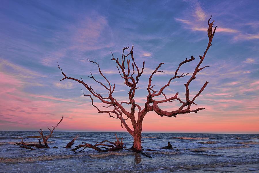 Jekyll Island Oak by Jon Glaser