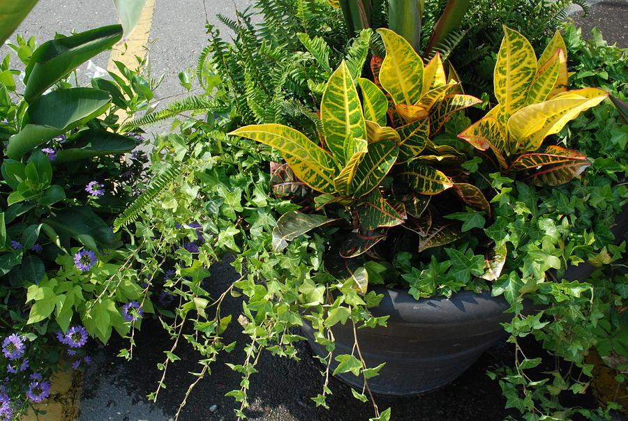 Jeremiah Plant And Company Photograph