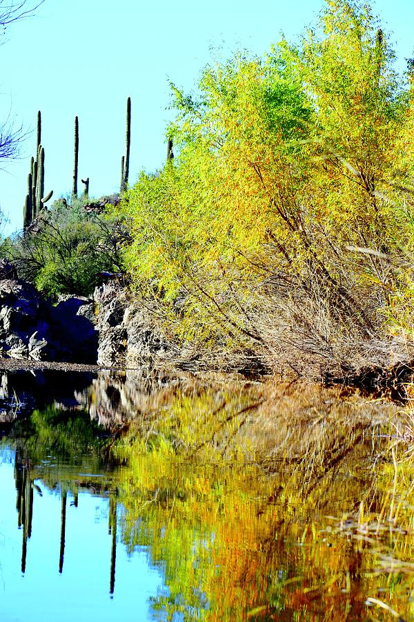 Jewel In The Creek by Lisa Pandone
