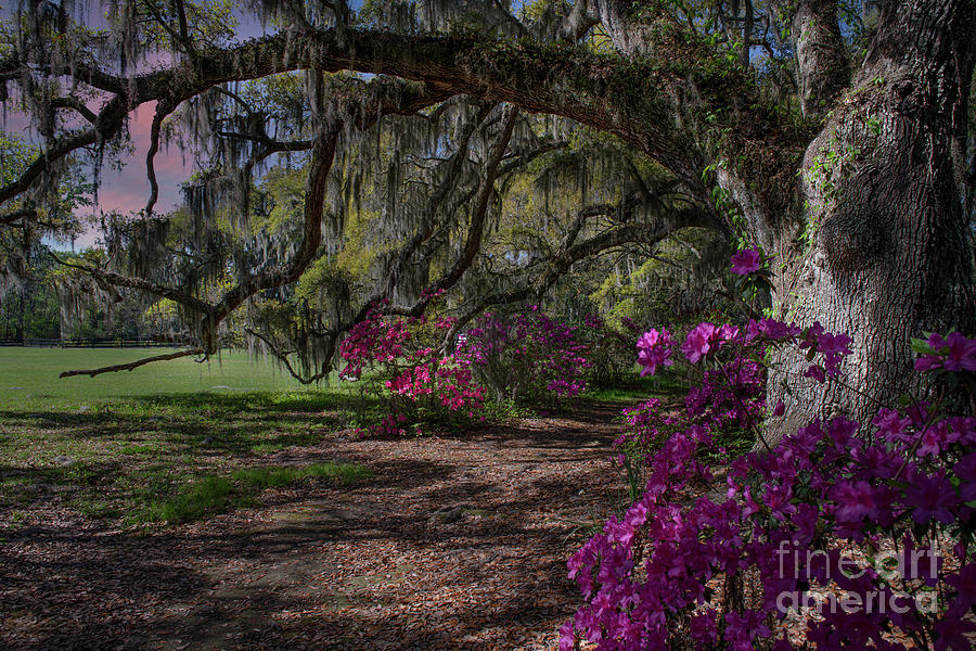 Jewel Of The South - Magnolia Plantation Photograph