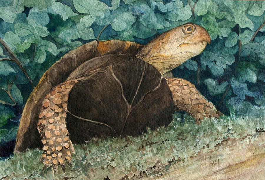 Jimmy's Turtle by Lael Rutherford