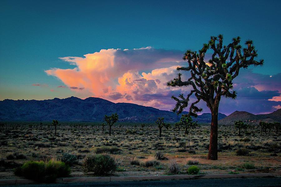 Joshua Tree National Monument Photograph - Joshua Tree Sunset by G Wigler