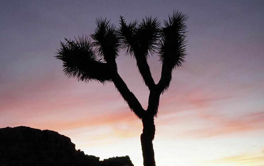 Joshua Tree Photograph - Joshua Tree Winter Sunset by Frick And Hammons