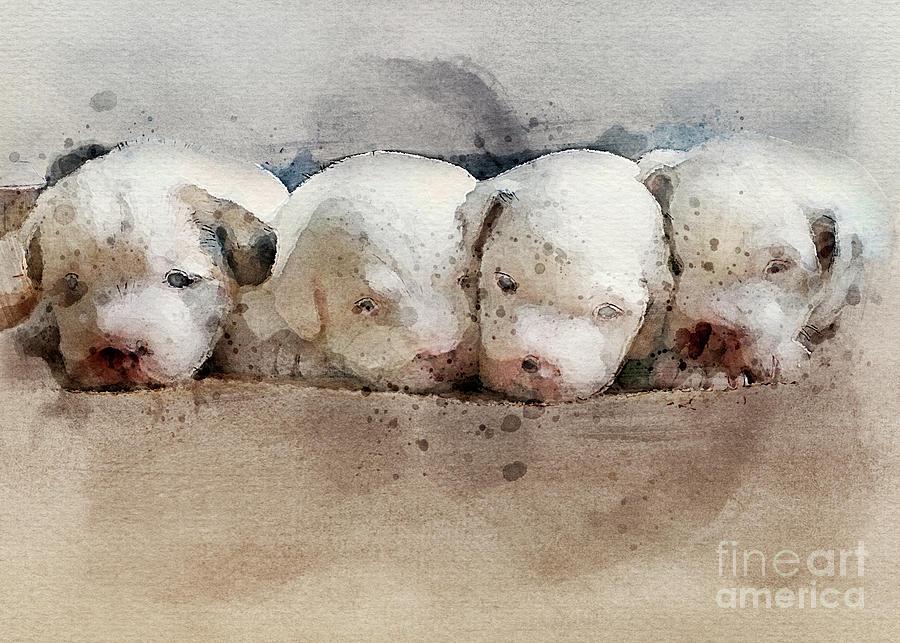 Jrt Puppies Photograph
