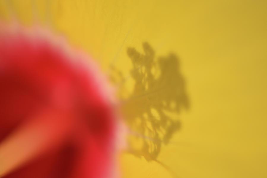 July, Yellow by Amanda Rimmer
