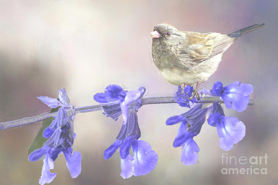 Junco on the Flowers by Janette Boyd