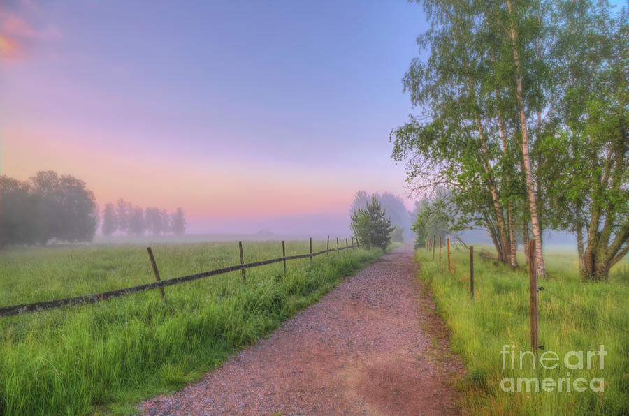June Morning 5 Photograph