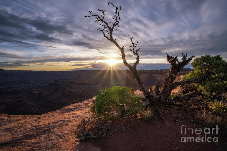 Juniper Sunset Photograph