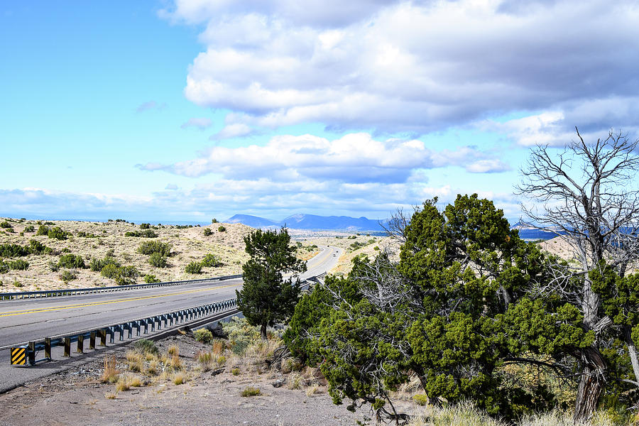 Juniper Trees and US 550 by Tom Cochran