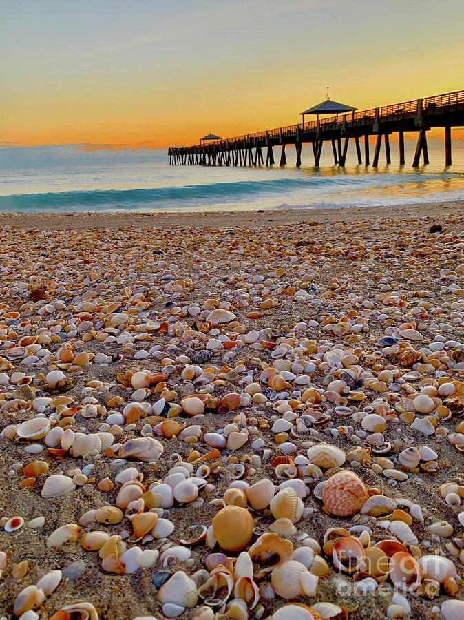 Juno Beach Shells Photograph
