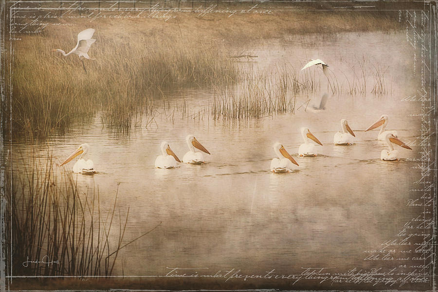 White Pelicans Digital Art - Just Another Day at the Lake by Linda Lee Hall