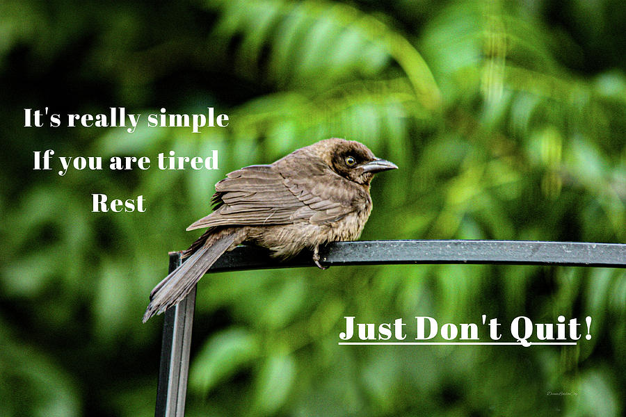 Just Don't Quit by Diane Lindon Coy