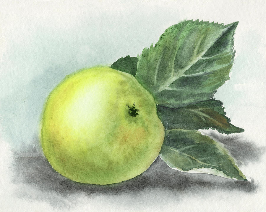 Just Picked Old Fashioned Organic Watercolor Apple Painting