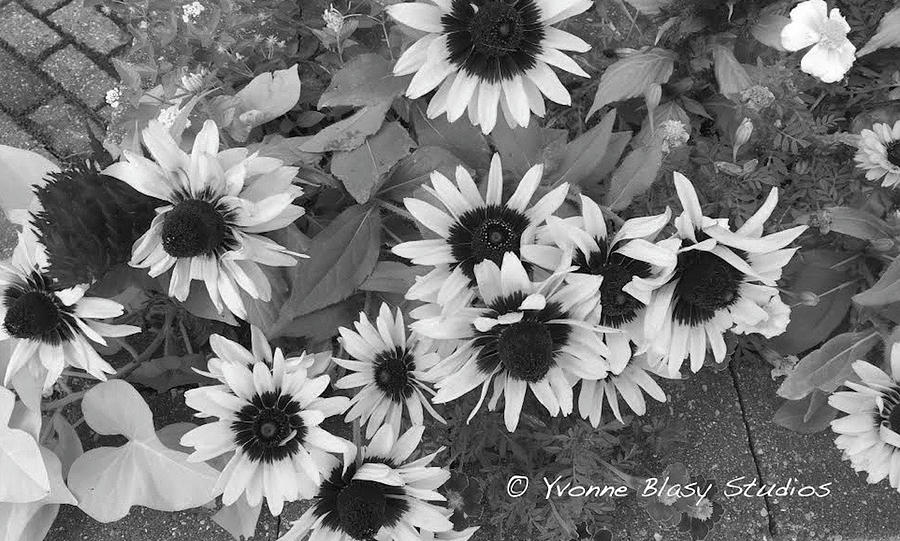 Just Plain Jane Floral by Yvonne Blasy