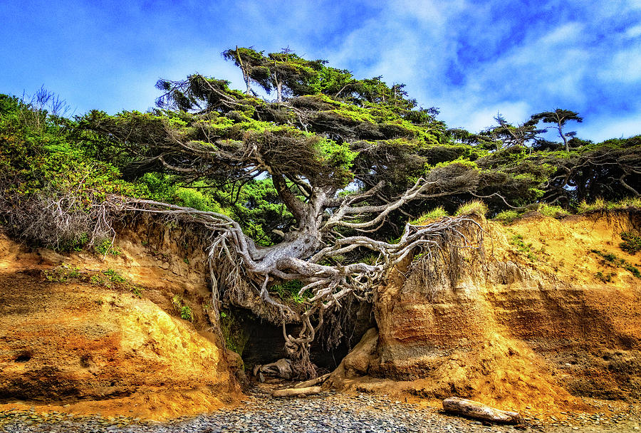 Kalaloch Tree of Life by Carolyn Derstine