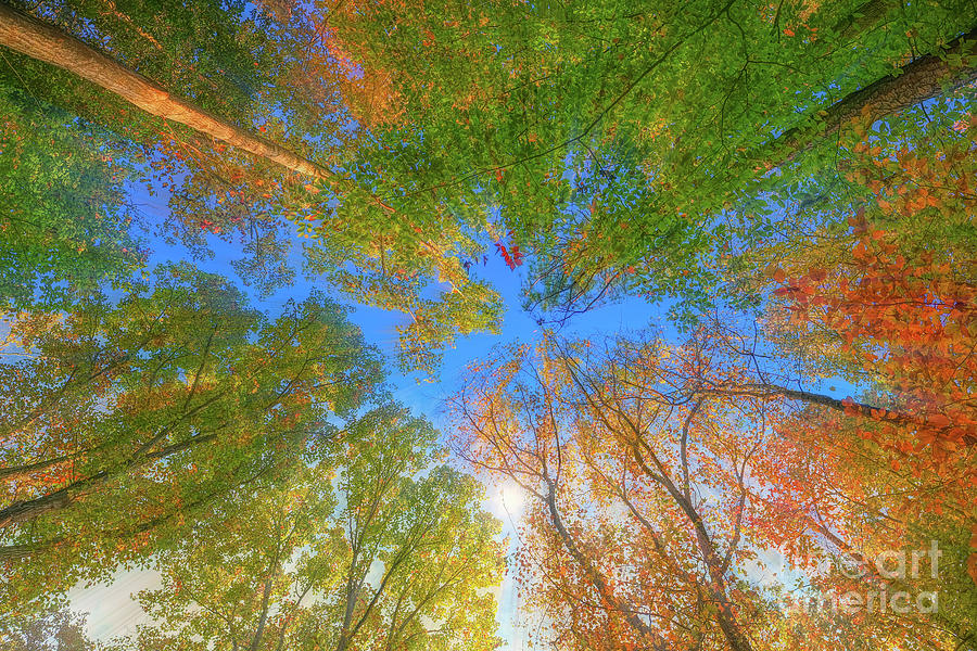 Kaleidoscope Of Tall Trees Photograph