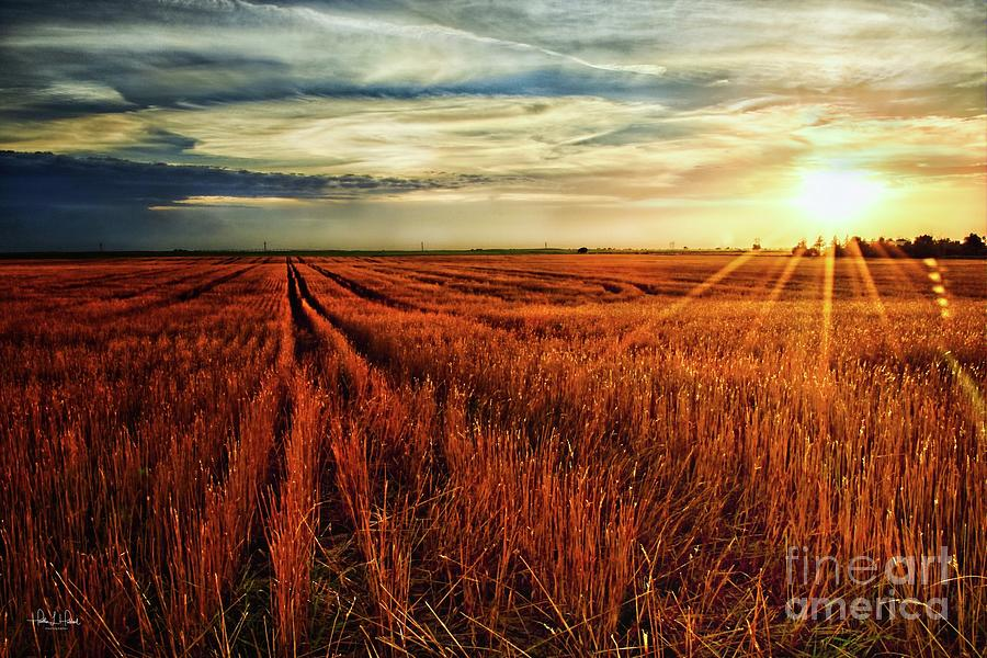 Kansas Wheat Photograph by Heather Hubbard