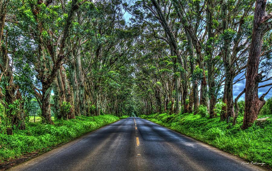 Koloa Kauai Photograph - Kauai Eucalyptus Tree Tunnel South Shore Kauai Hawaii Landscape Art by Reid Callaway