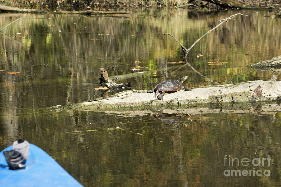 Kayak and Turtle by Randall Saltys