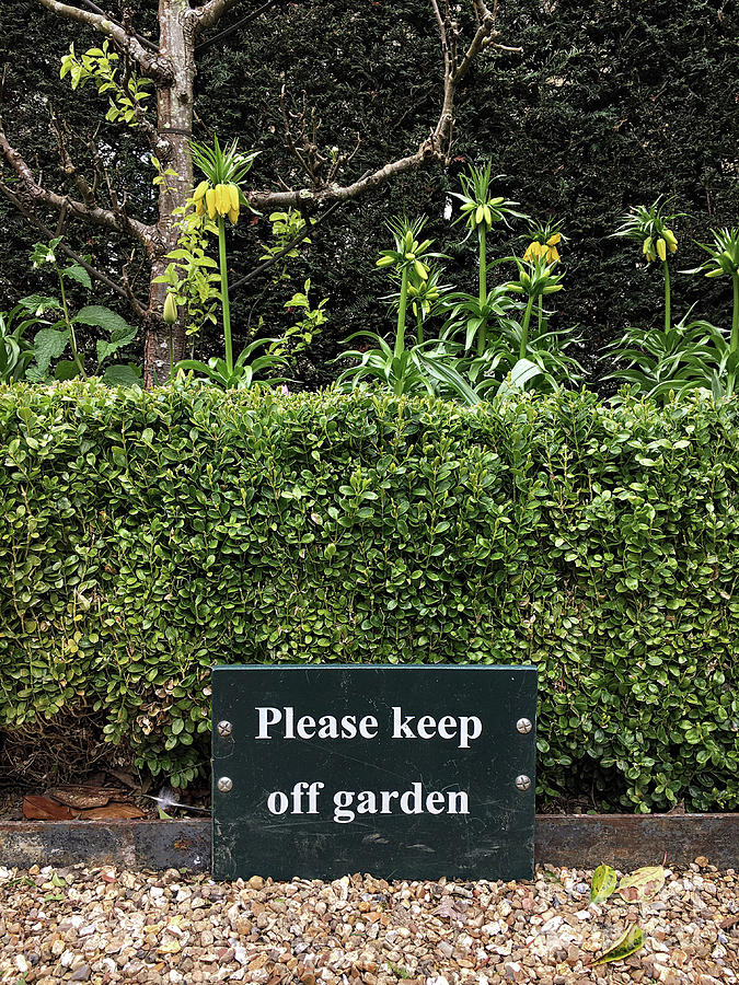 Background Photograph - Keep Off The Garden  by Tom Gowanlock