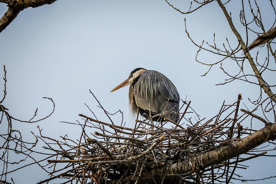 Bird Photograph - Keeping Watch by Kamie Stephen