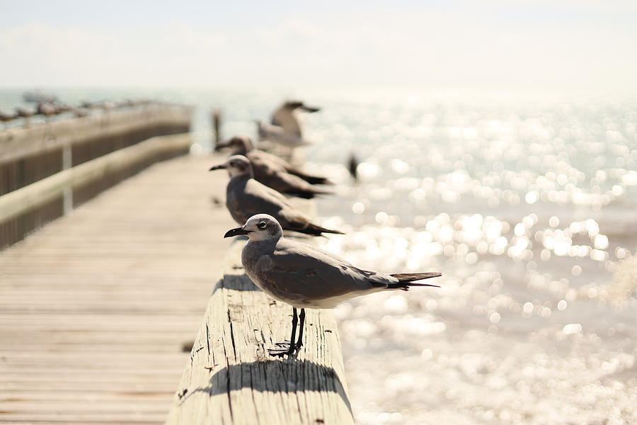 Key West Seagull And Friends by Blair Damson