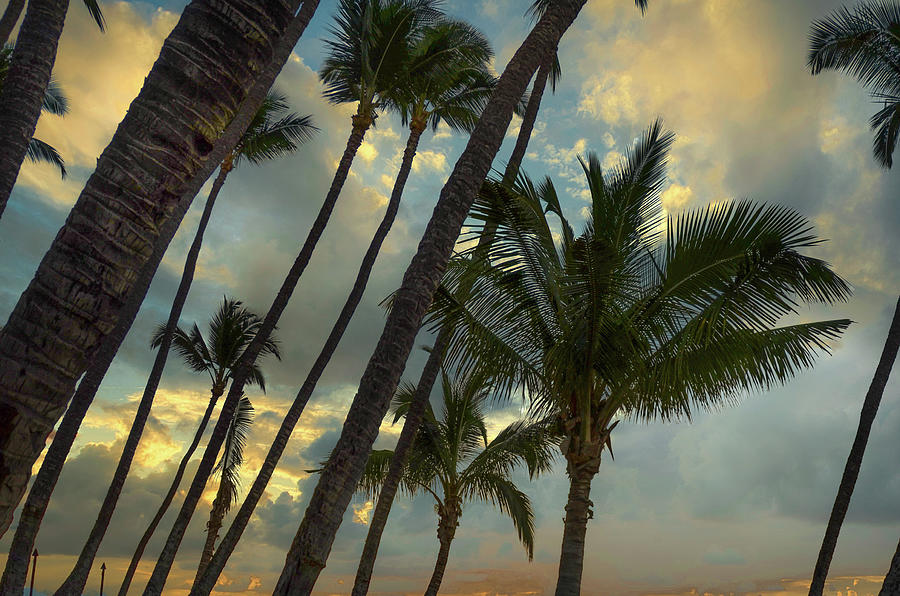 Kihei Palm Life Photograph