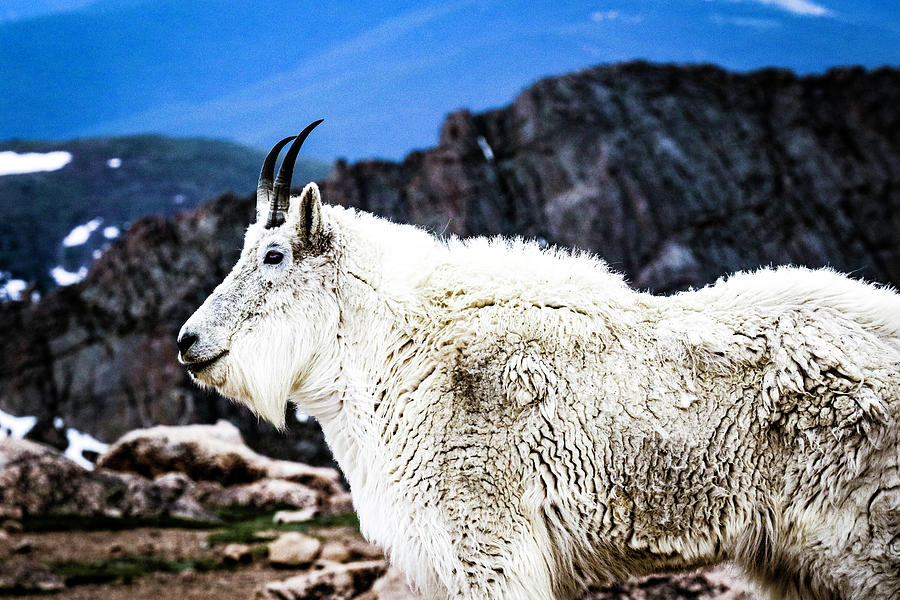 Colorado Photograph - King of the Mountain by Kamie Stephen