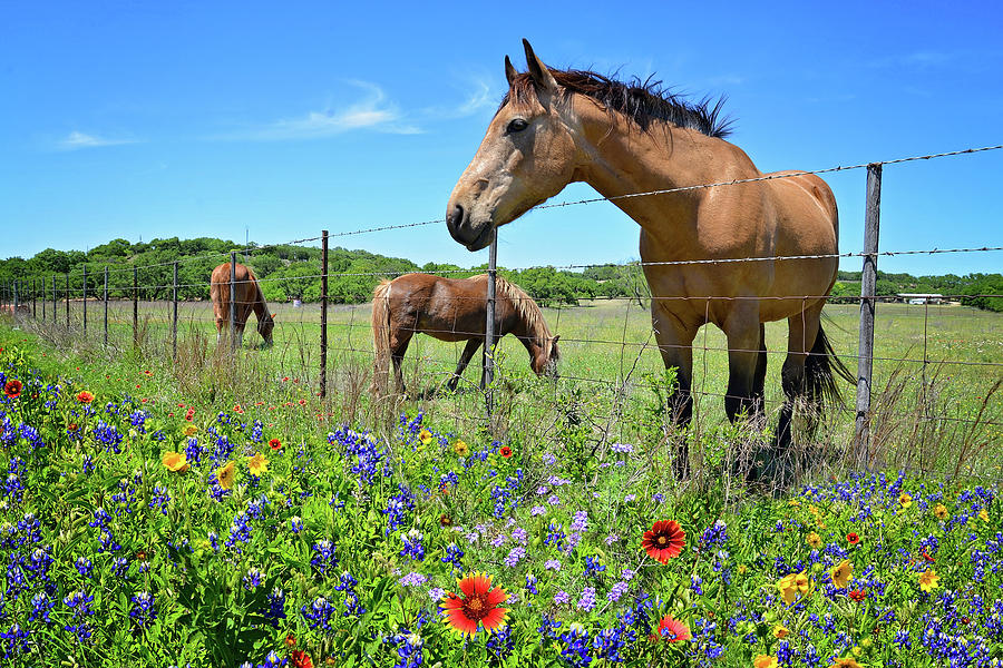 King of the Wildflower Pastures by Lynn Bauer